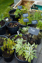 vegetable garden pots, herbs,