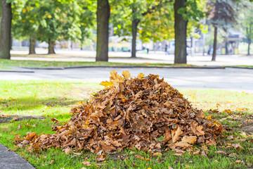 Heap of dry oak leaves