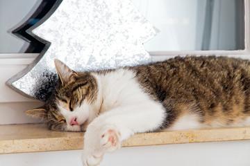 Schlafende Katze auf der Fensterbank