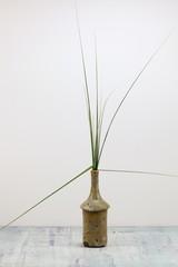 Stillleben, Vase mit Gräsern