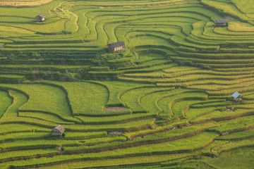 Beautiful Rice Terraces, South East Asia
