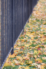 fence of the park