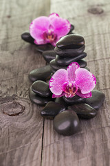 Fuchsia Moth Orchids and black stones on weathered deck