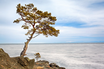 Lonely tree near Baikal lake