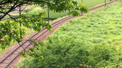 緑の中の線路