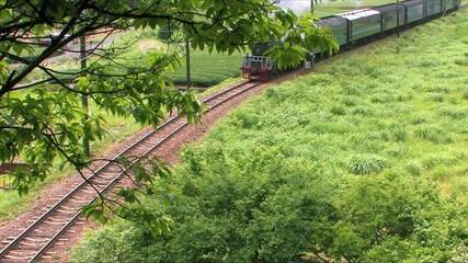 緑の中を走る蒸気機関車