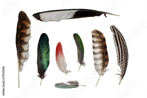 Poster Feathers set collection isolated on white