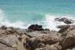canvas print picture - Felsen mit Meer