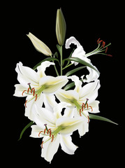 four white lily flowers on black