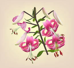 lily pink branch on light background