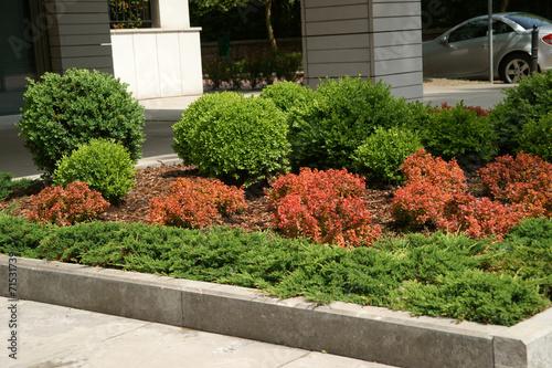 Fotobehang Tuin Buxus, Berberis thunbergii Admiration, Juniperus horizontalis