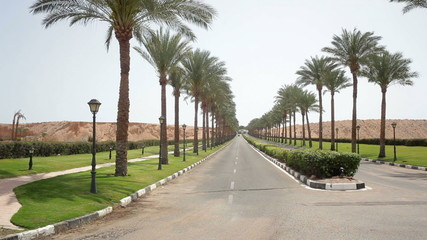 nice asphalt road lined with palm trees on the sides in Egypt