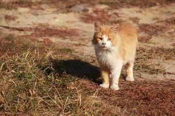 Кот в осенних лучах солнца