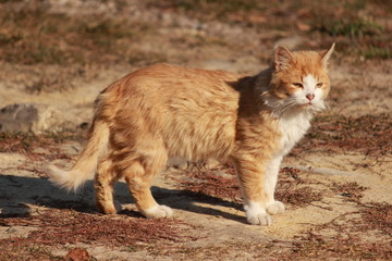Кот греется в лучах осеннего солнца