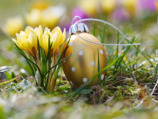 crocus with easter eggs on meadow