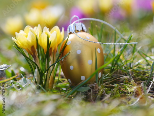 canvas print picture crocus with easter eggs on meadow