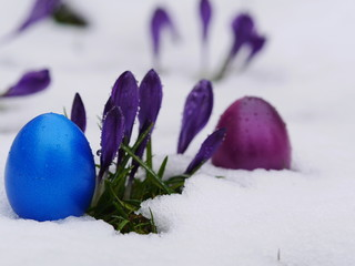 easter eggs laying snow flowers