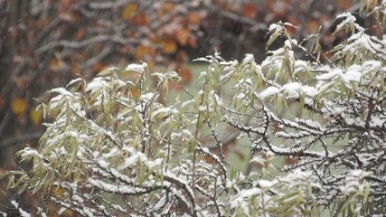 Snowfall in early winter in the garden
