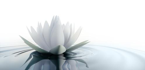 Einzelne Lotusblüte