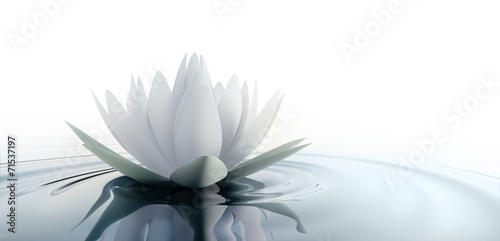 Einzelne Lotusblüte - 71537197