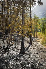 post-fire in the wood vertical