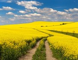 Field of rapeseed with rural road and beautiful cloud