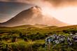 Leinwanddruck Bild - Huge bull in front of volcano Pico-Azores