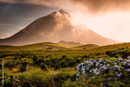 Foto op Canvas Vulkaan Huge bull in front of volcano Pico-Azores