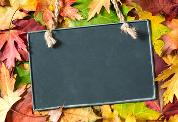 Chalkboard  on autumnal leaves