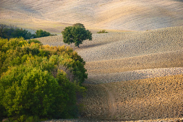 Tuscan landscape in autumnal colors, Italy