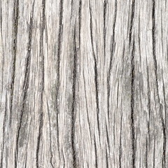 Close - up bark of tree texture and background