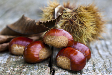 chestnuts closeup on natural background