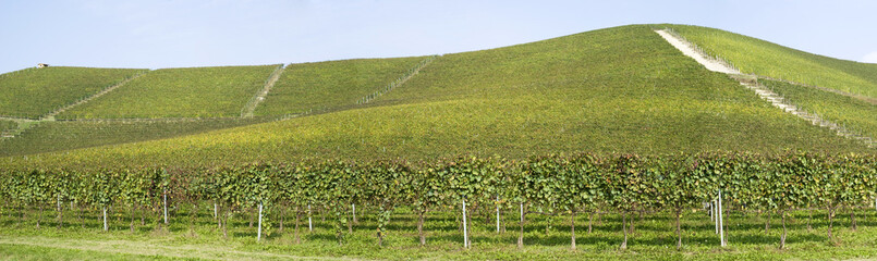 Vineyards on the hills of Langhe in Piedmont, Northern Italy