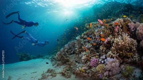 canvas print picture Freedivers