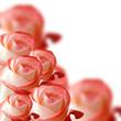 Obrazy na płótnie, fototapety, zdjęcia, fotoobrazy drukowane : collage of orange roses on a white background