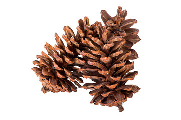 close up pine cone group on isolated white, clipping path.
