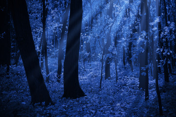 Forest on moonlit night