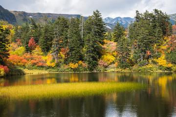 大雪山緑沼の紅葉と白雲岳