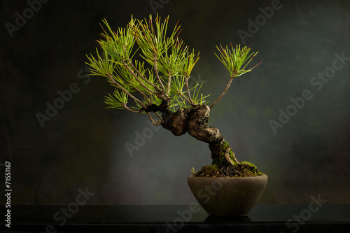 Foto op Canvas Bonsai Bonsai ...