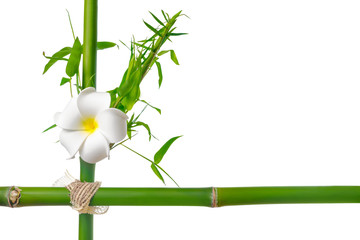 bamboo leaves with frangipani flower frame made of stems is isol