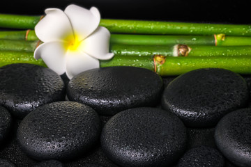 beautiful spa concept of zen basalt stones, white flower frangip