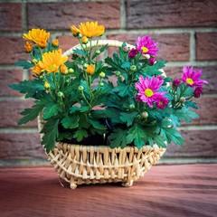 Chrysanthemen im Körbchen