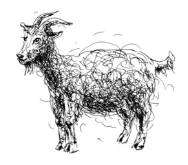 sketch doodle drawing of goat or sheep, chinese lunar symbol 201