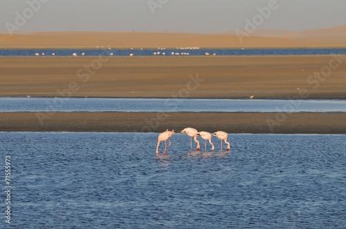 Aluminium Flamingo Flamingos (Phoenicopteridae) in den Salzpfannen von Walvisbay
