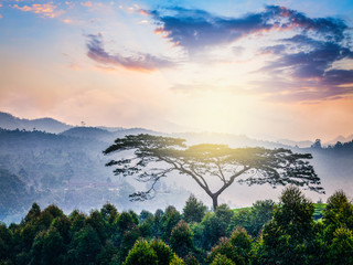 Lonely tree on sunrise in hills