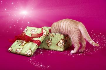 Katzenbaby kopfüber im Weihnachtsgeschenk