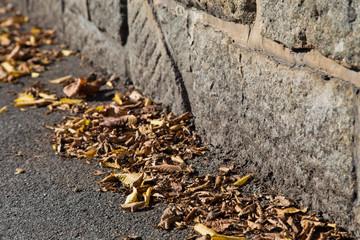 Herbst in Aigen/ Schlägl - Herbstfarben