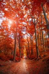 Pathway through the autumn park unde sunlight