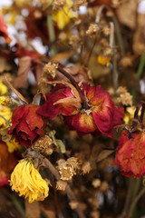 Bouquet of dried withered roses.