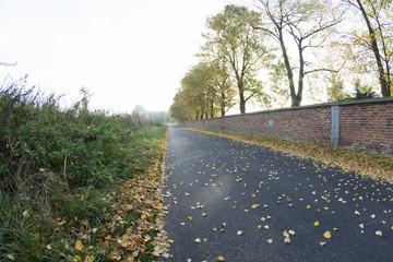 Jesienny widok
